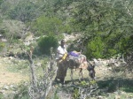 Man with donkey in the Galgala forest