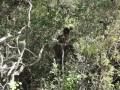 Galgala man with a donkey